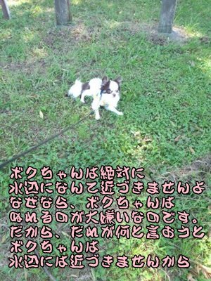 5_20130920142249b60.jpg
