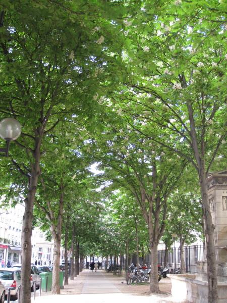 マロニエの並木道