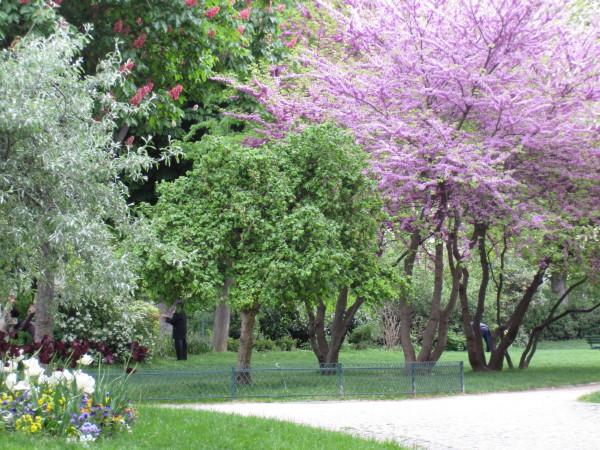百花繚乱の公園