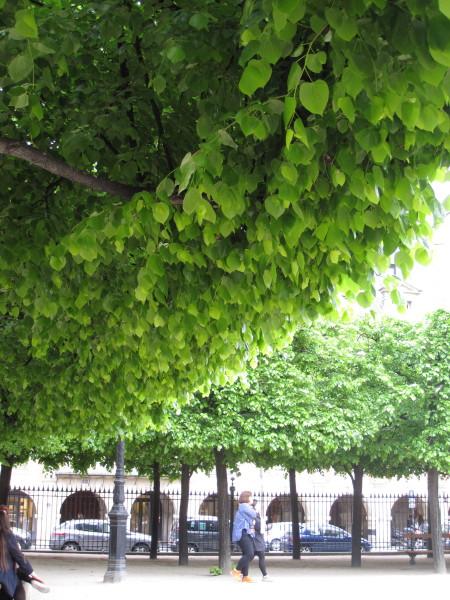 緑の棚の通り道