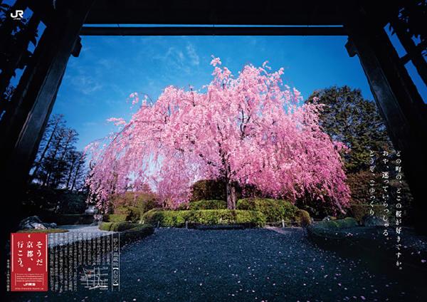 2013年春 そうだ京都へ行こう