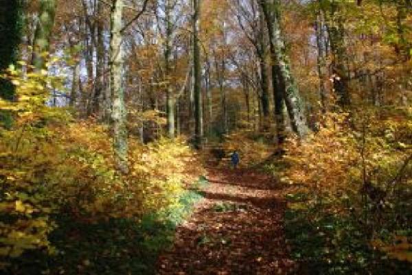 枯葉舞う小道