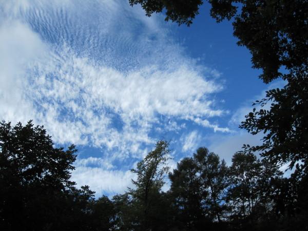 秋の雲 そして木