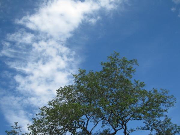 秋の雲 そして木2