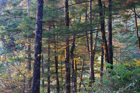 朝日に輝く木々