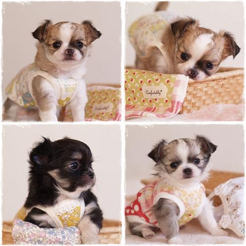 puppy002.jpg