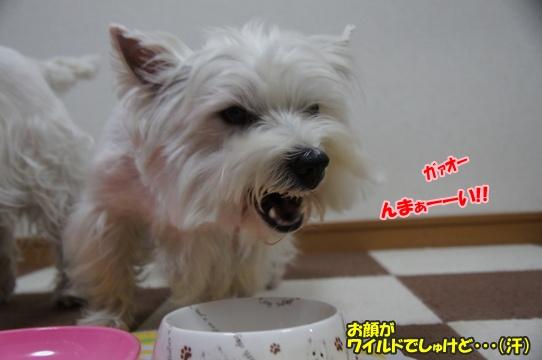 azuki6