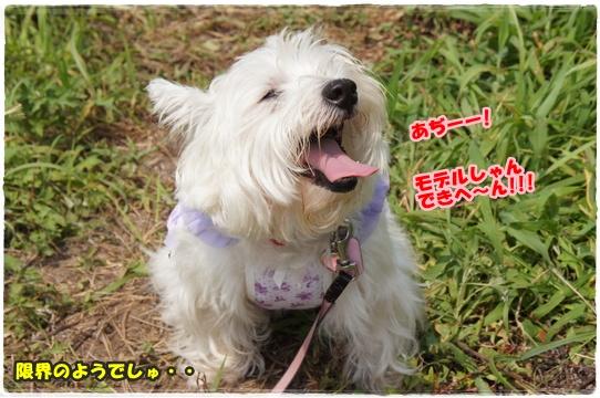 himawari10