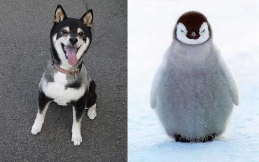 あずきとペンギン