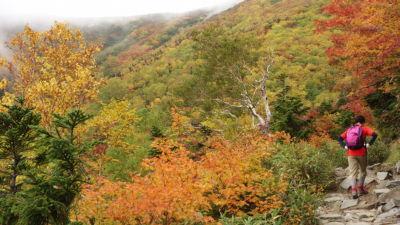 紅葉に囲まれた登山道