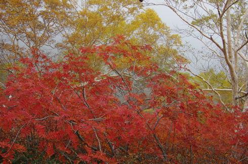 下ノ樺の紅葉