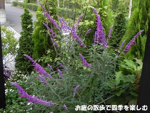 amejisutose-ji2_201410102140155d2.jpg