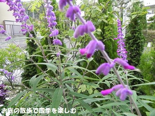 amejisutose-ji_201410102140137b4.jpg