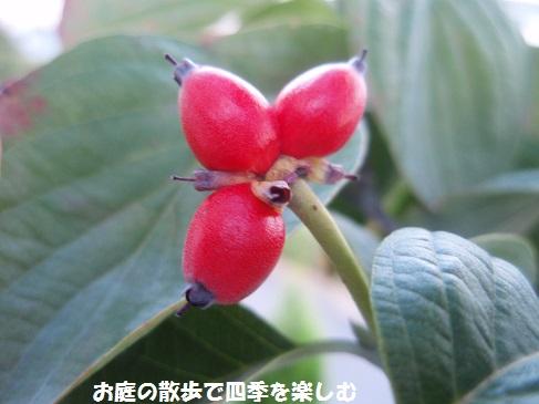 hanamizuki10_20141011234345994.jpg