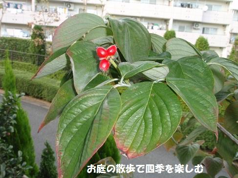 hanamizuki11_201410112343474b0.jpg