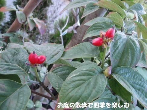 hanamizuki12_20141011234344c83.jpg