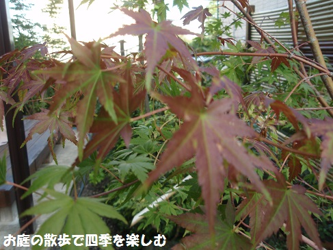 momiji3_20141012102718ef1.jpg