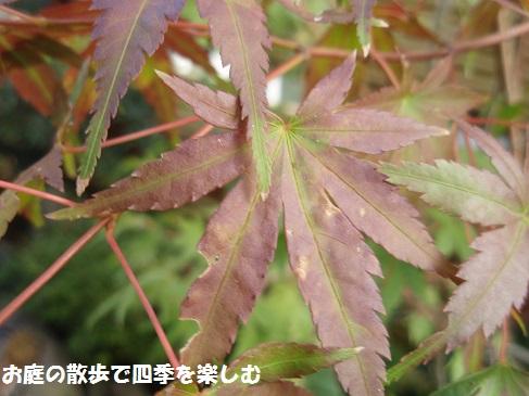 momiji4_20141012102720ae1.jpg