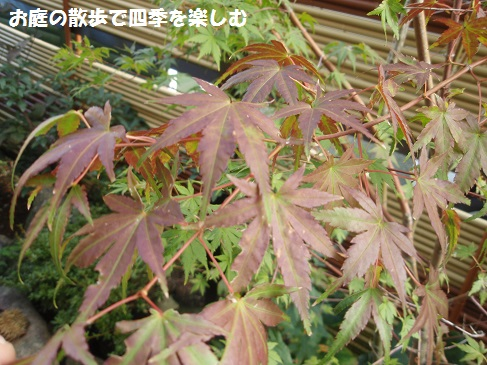 momiji5_20141012102717f37.jpg
