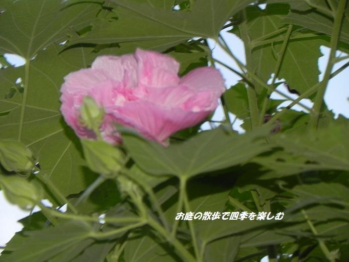 suihuyou3_201409092031521c8.jpg