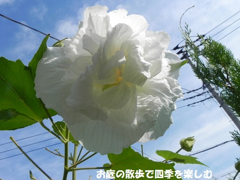 suihuyou7_20141003203542bfb.jpg