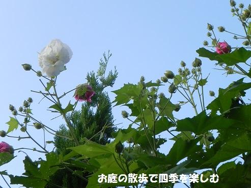 suihuyou8_2014100320353944b.jpg
