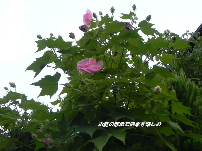 suihuyou_20140909203148429.jpg