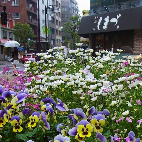 haramishimadu11.jpg