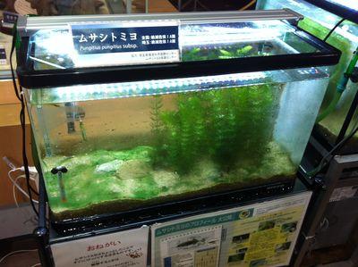 20130713kitamoro2.jpg