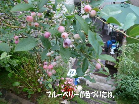 20130724_5.jpg