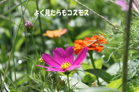20130728_2.jpg