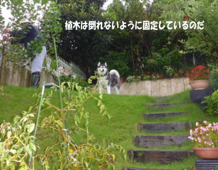 20130916_4.jpg