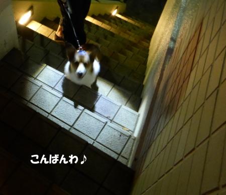 20130924_1.jpg