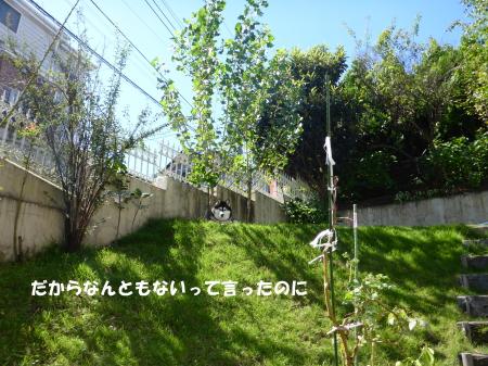 20130928_2.jpg
