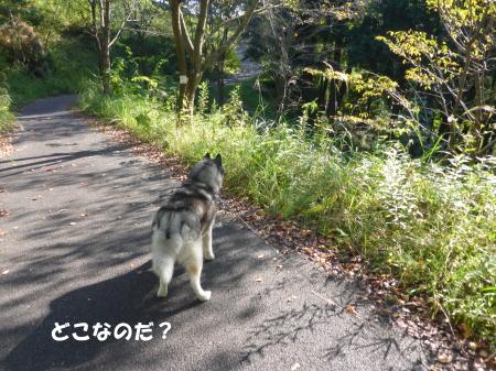 20131013_4.jpg