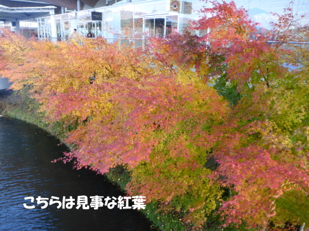 20131108_5.jpg