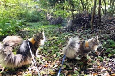軽井沢と猫たち