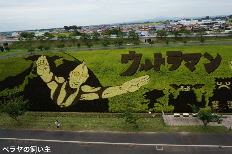 BNK-20130907-UM-Rice.jpg