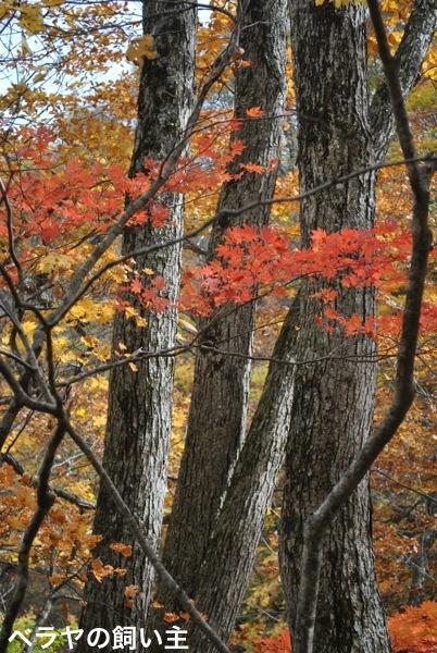 BNK-Trees-DSC_0671.jpg