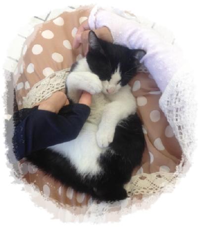 子猫3か月2