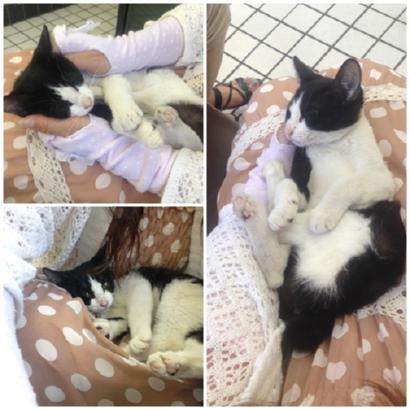 子猫3か月