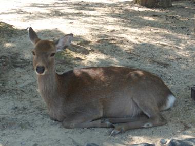 くつろぐ鹿さん