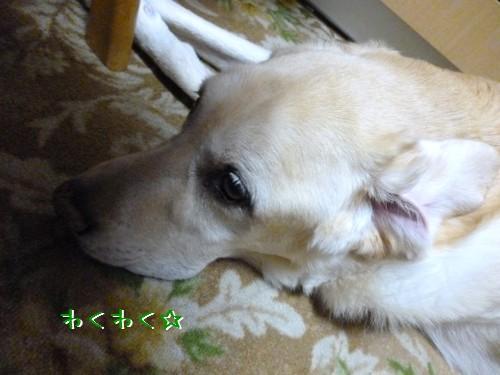 blog1_20130826220339d73.jpg