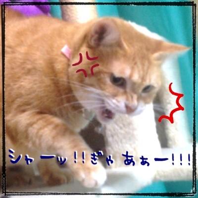 blog5_2013090822550691f.jpg