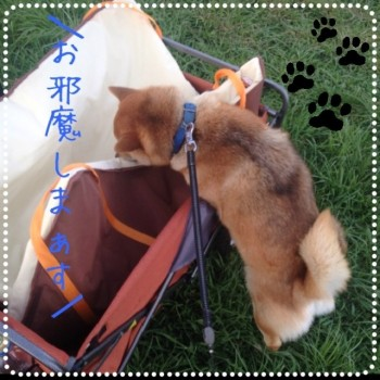 blog5_20130916232802476.jpg