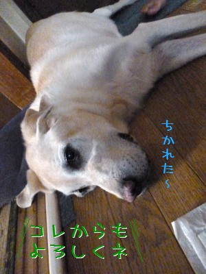 blog9_20130912230516438.jpg