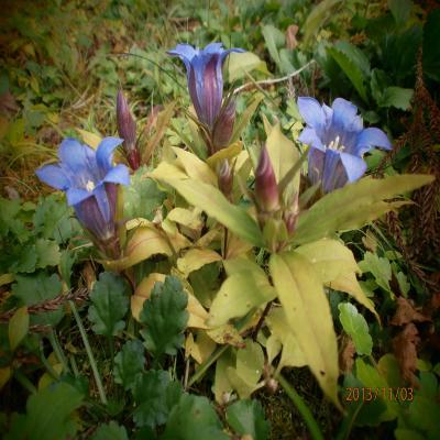 箱根の庭の花