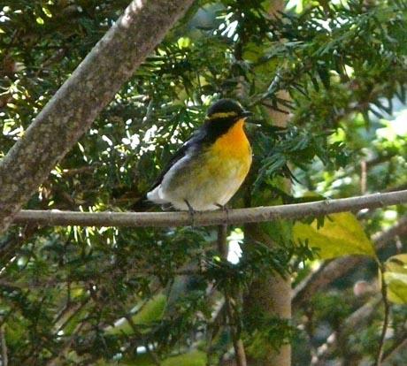 bird212.jpg