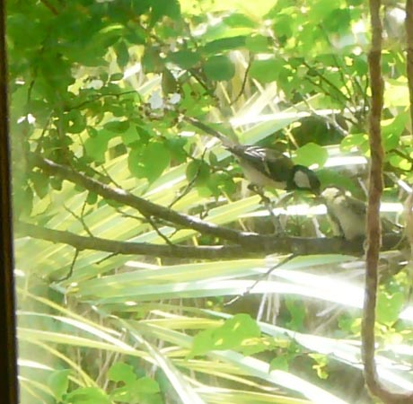 bird816.jpg
