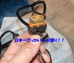 PB080002.jpg